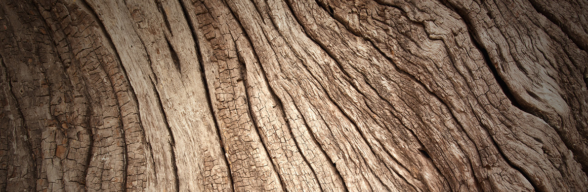 [Divider] [About us] [SRI] Tree bark